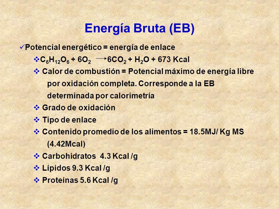 Energía Bruta (EB) Potencial energético = energía de enlace