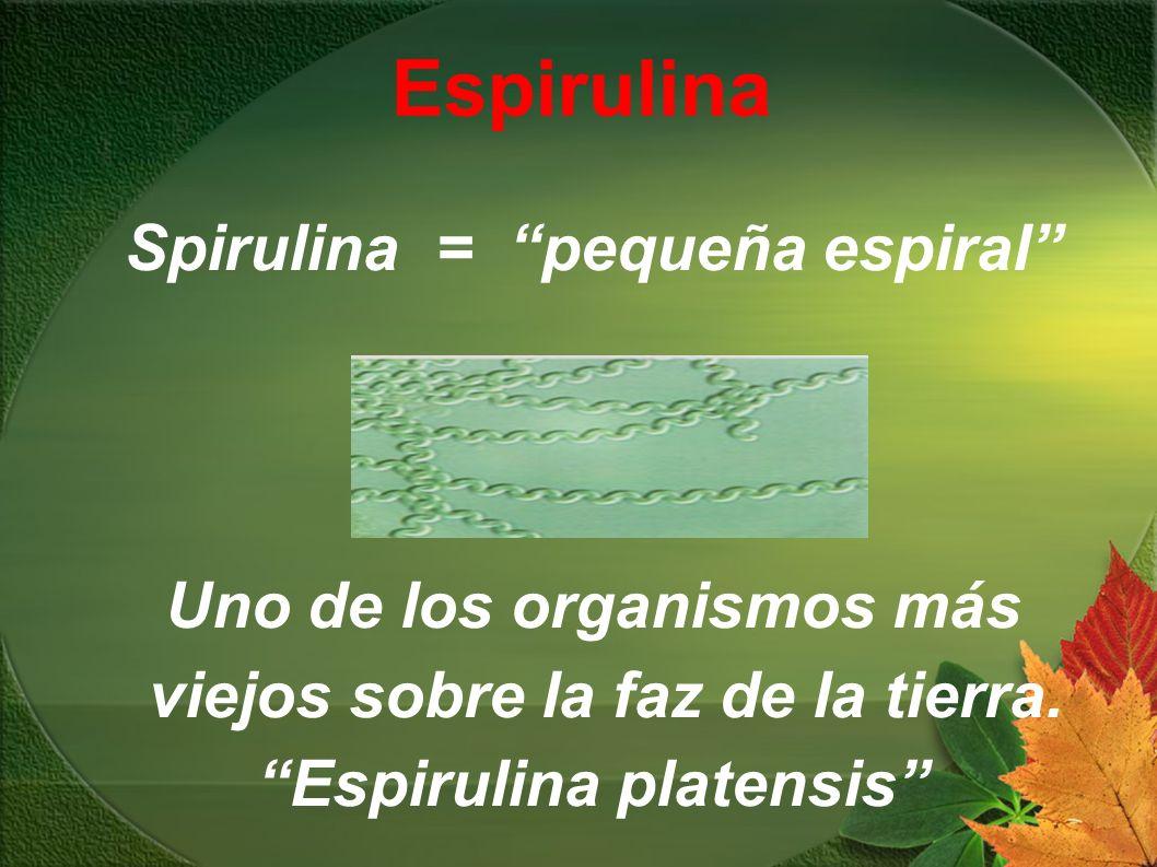 Espirulina Spirulina = pequeña espiral