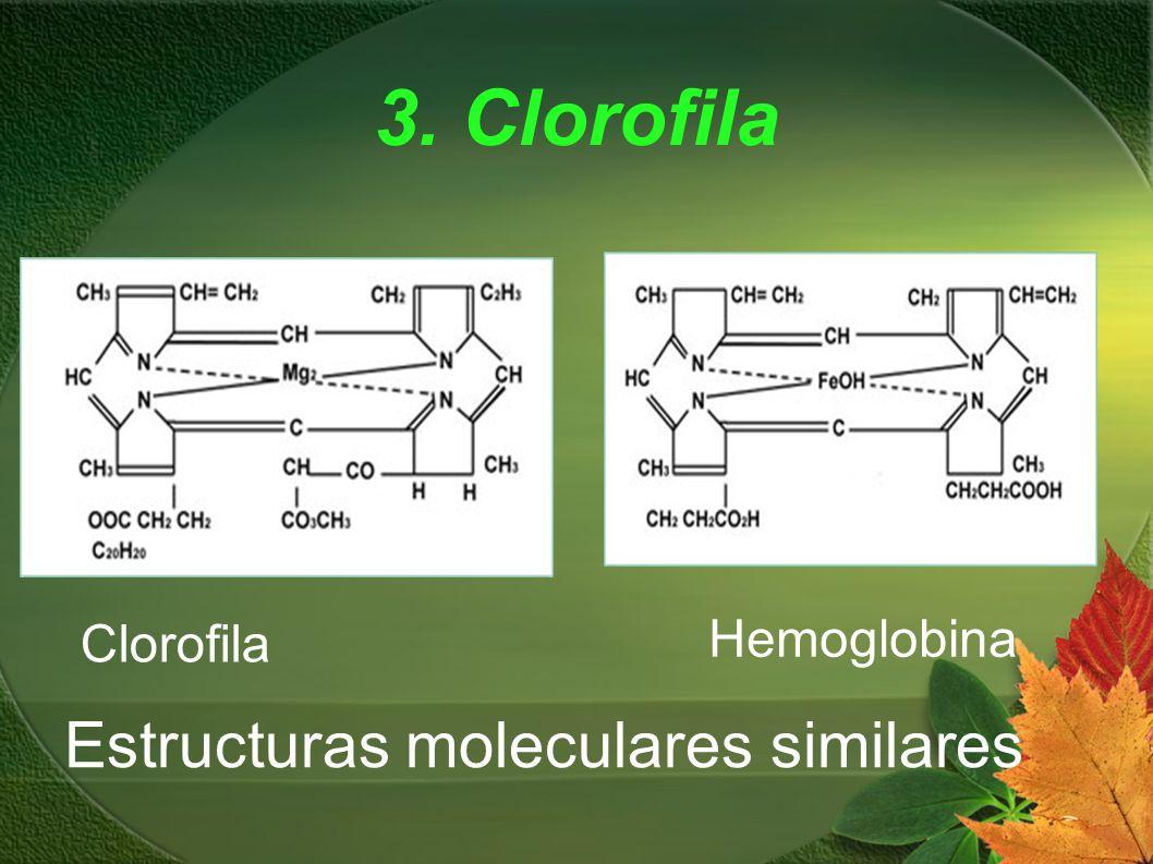 3. Clorofila Clorofila Hemoglobina Estructuras moleculares similares