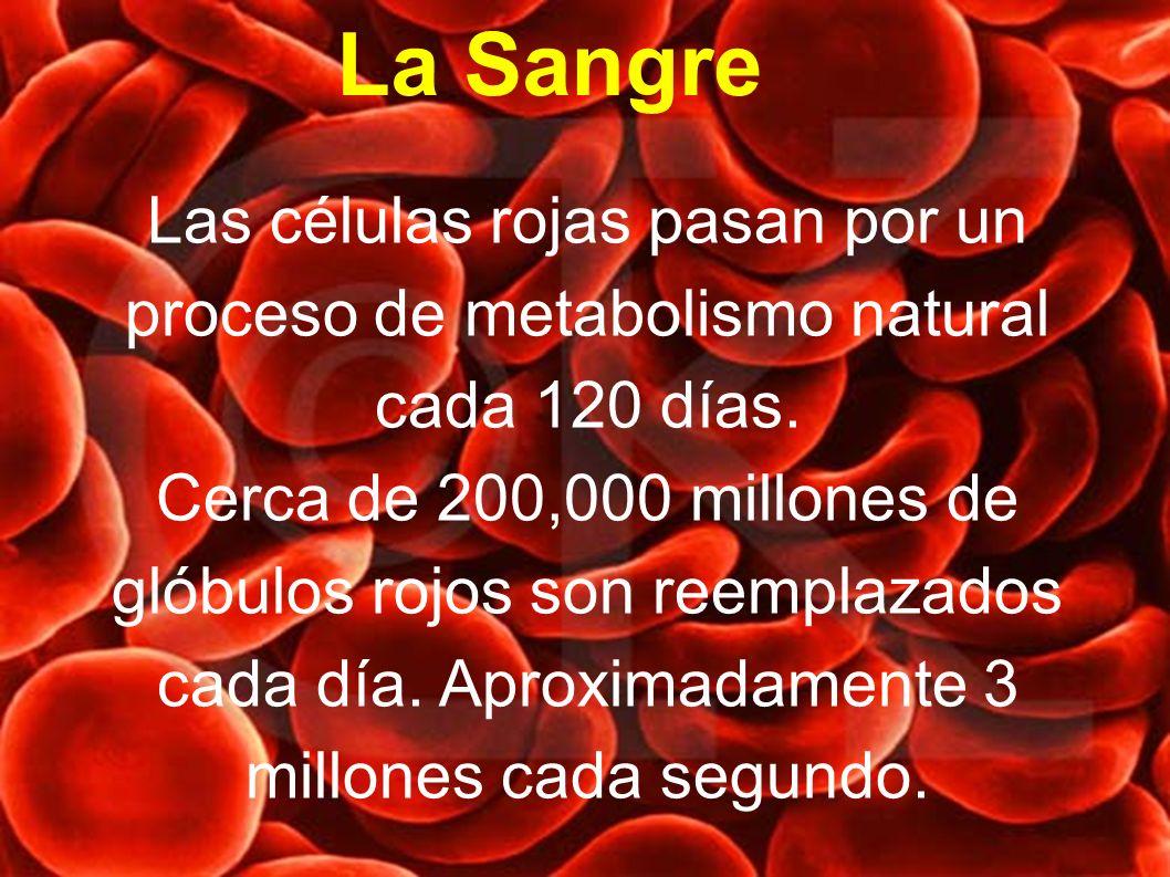 La Sangre Las células rojas pasan por un proceso de metabolismo natural cada 120 días.