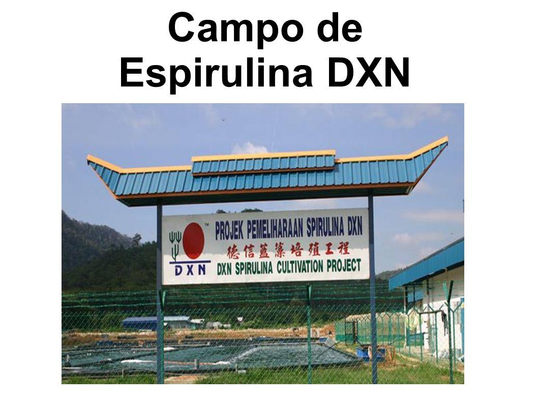 Campo de Espirulina DXN