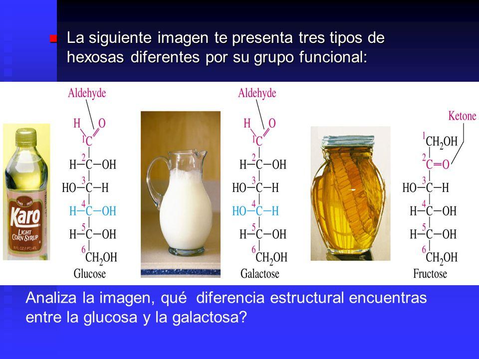 La siguiente imagen te presenta tres tipos de hexosas diferentes por su grupo funcional: