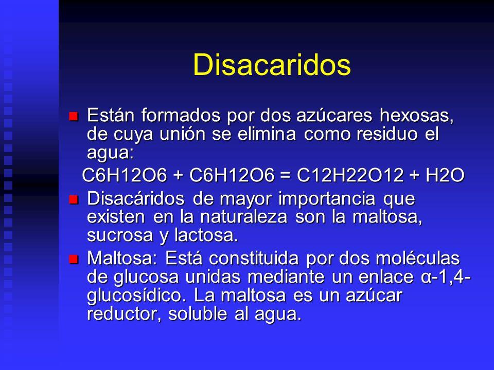 Disacaridos Están formados por dos azúcares hexosas, de cuya unión se elimina como residuo el agua: