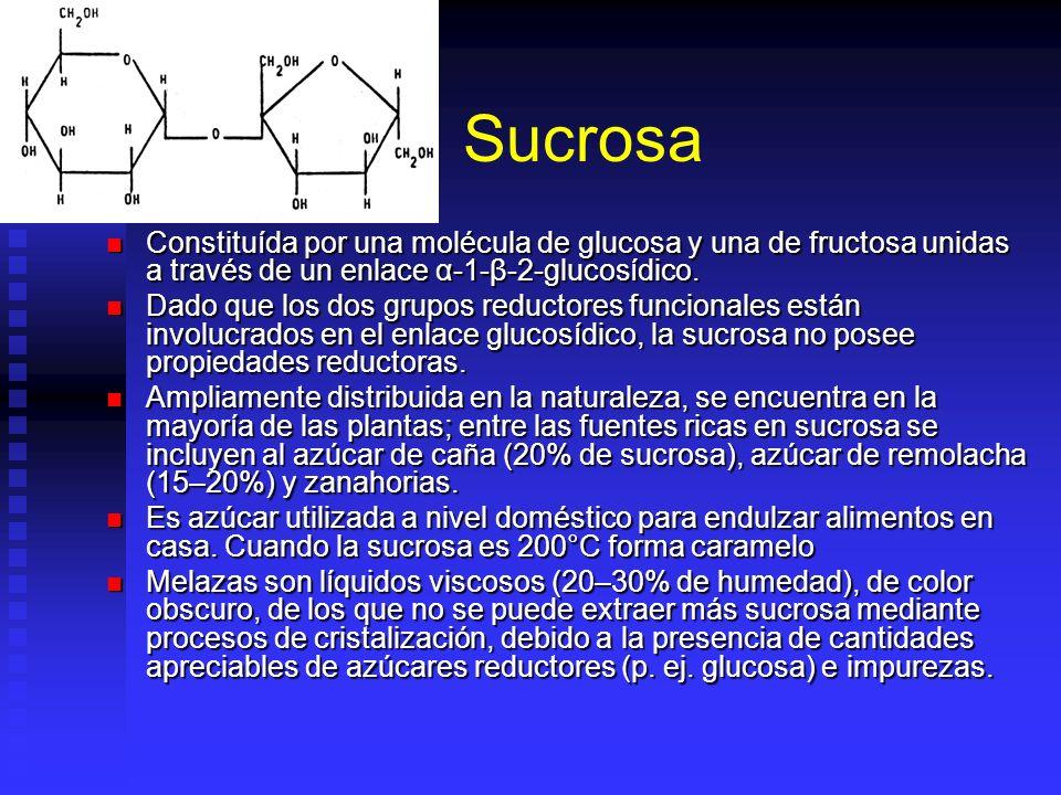 Sucrosa Constituída por una molécula de glucosa y una de fructosa unidas a través de un enlace α-1-β-2-glucosídico.