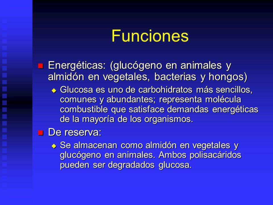 Funciones Energéticas: (glucógeno en animales y almidón en vegetales, bacterias y hongos)