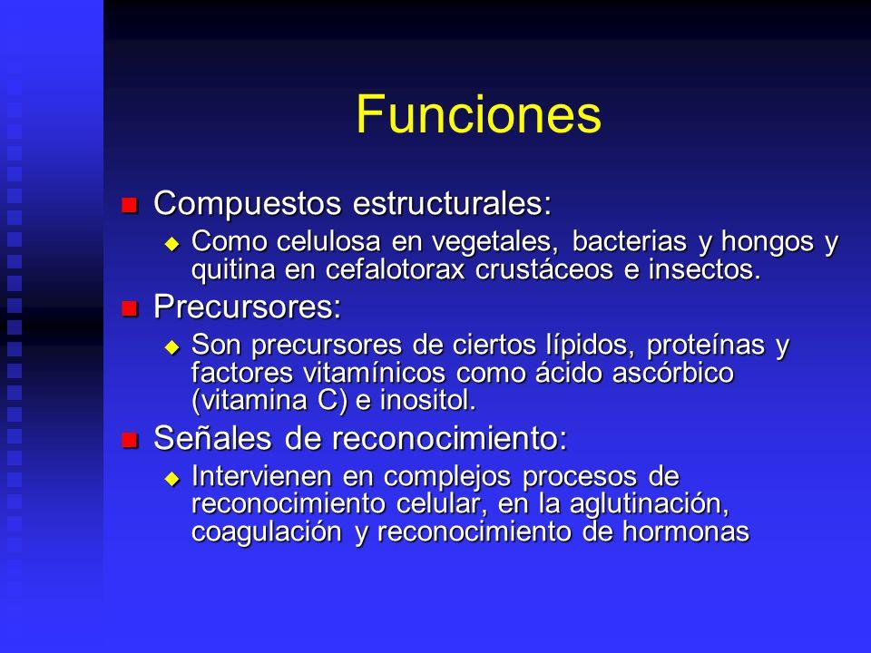 Funciones Compuestos estructurales: Precursores: