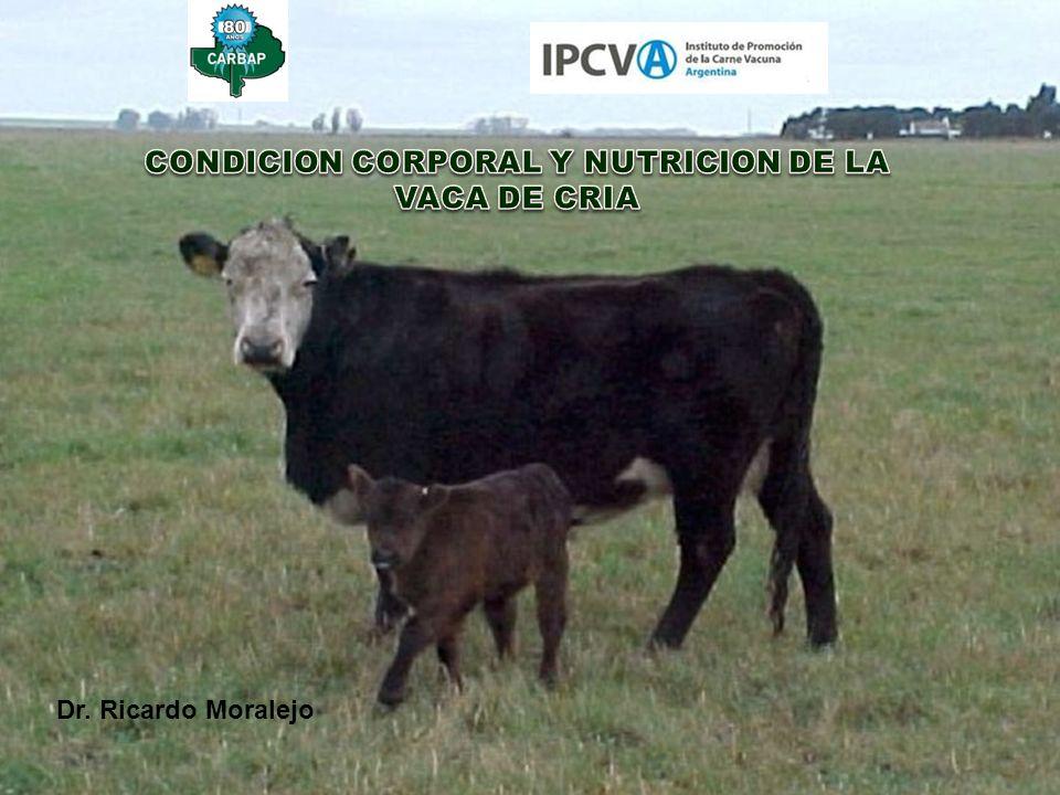 CONDICION CORPORAL Y NUTRICION DE LA VACA DE CRIA