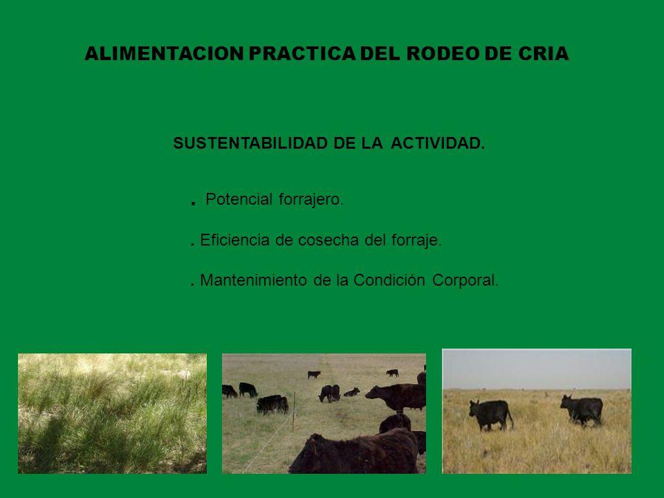 ALIMENTACION PRACTICA DEL RODEO DE CRIA