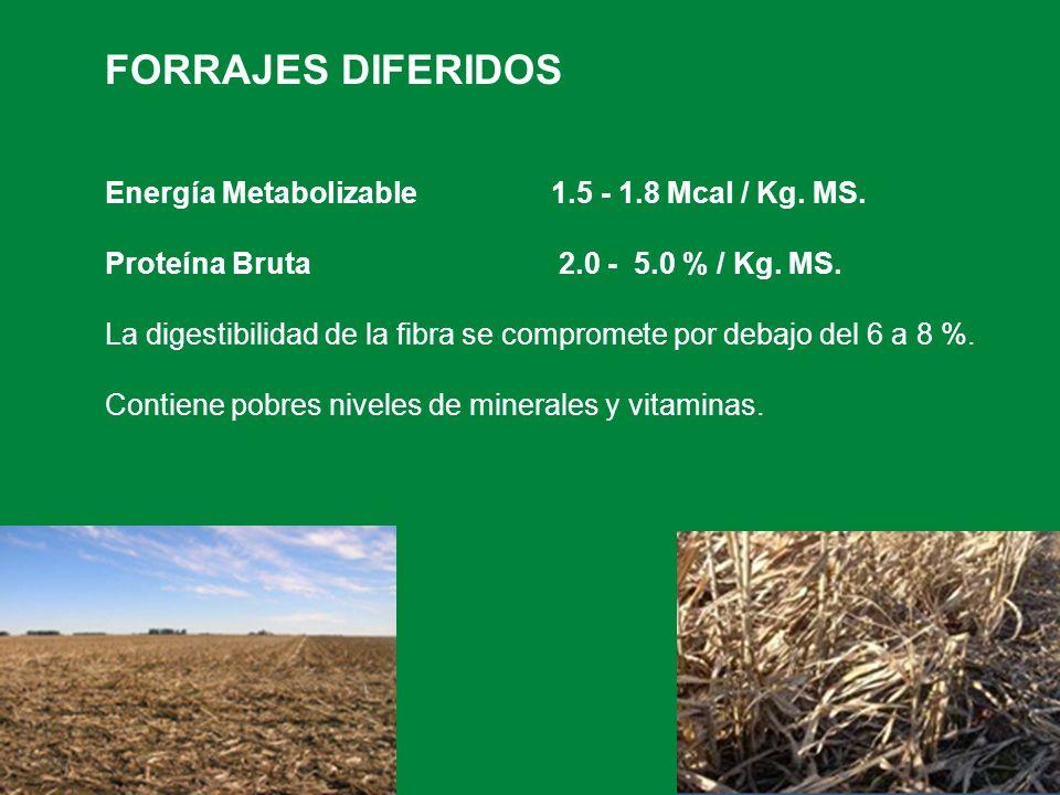FORRAJES DIFERIDOS Energía Metabolizable 1.5 - 1.8 Mcal / Kg. MS.