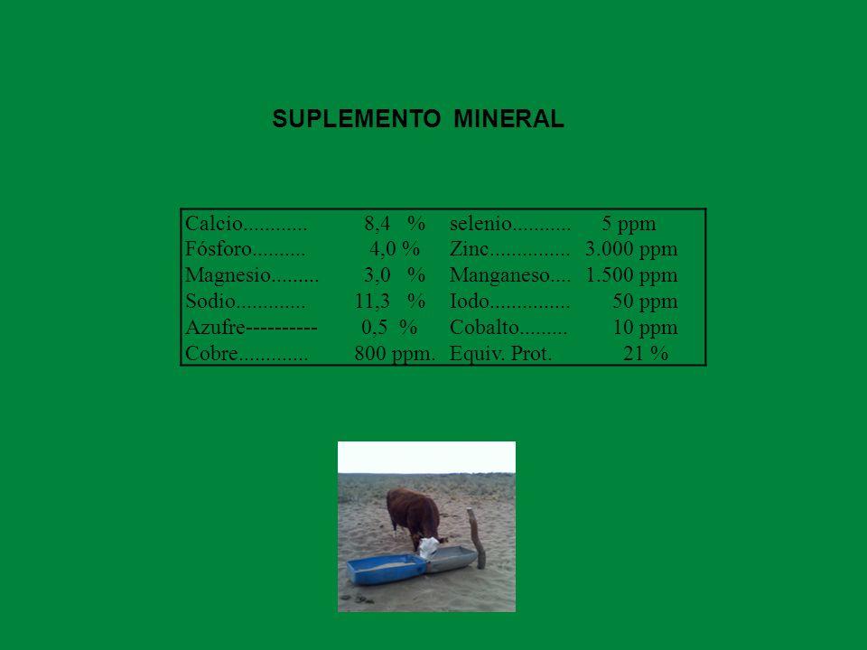 SUPLEMENTO MINERAL Calcio............ 8,4 % selenio........... 5 ppm