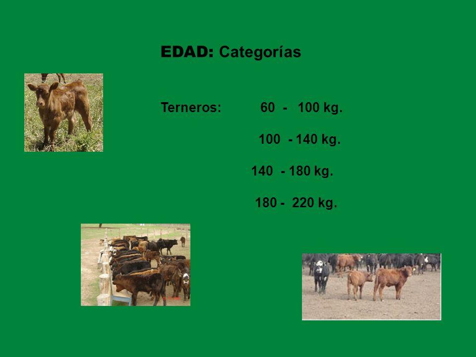EDAD: Categorías Terneros: 60 - 100 kg. 100 - 140 kg. 140 - 180 kg.