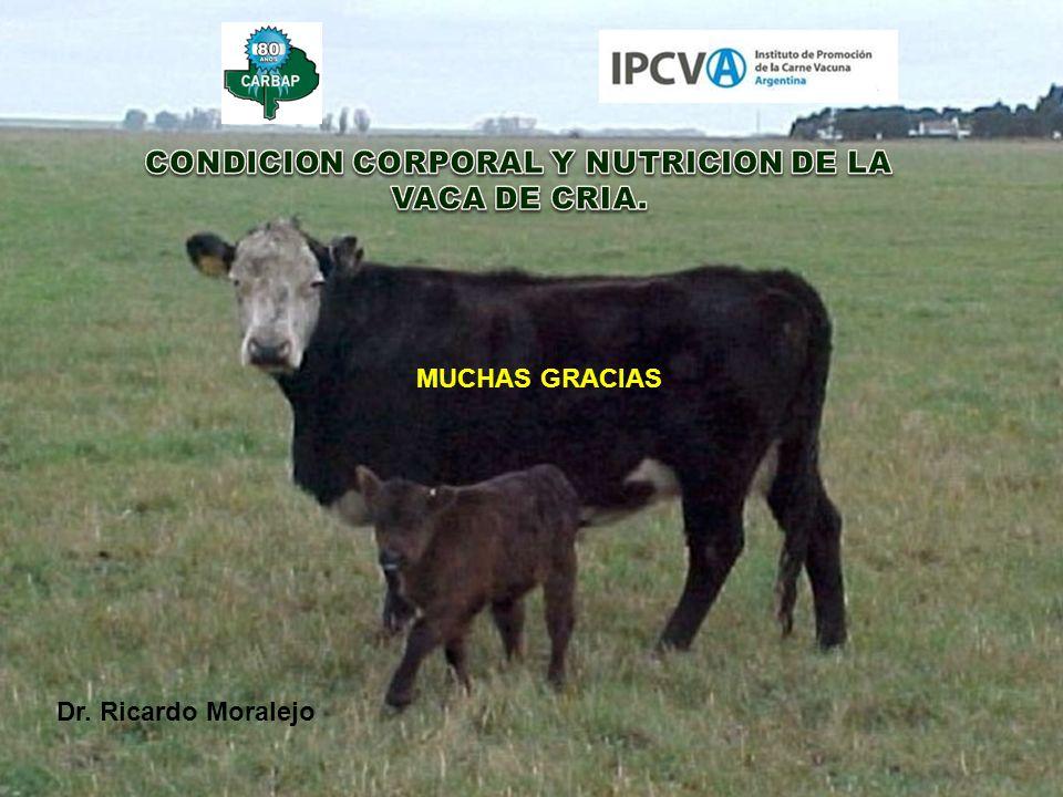 CONDICION CORPORAL Y NUTRICION DE LA VACA DE CRIA.