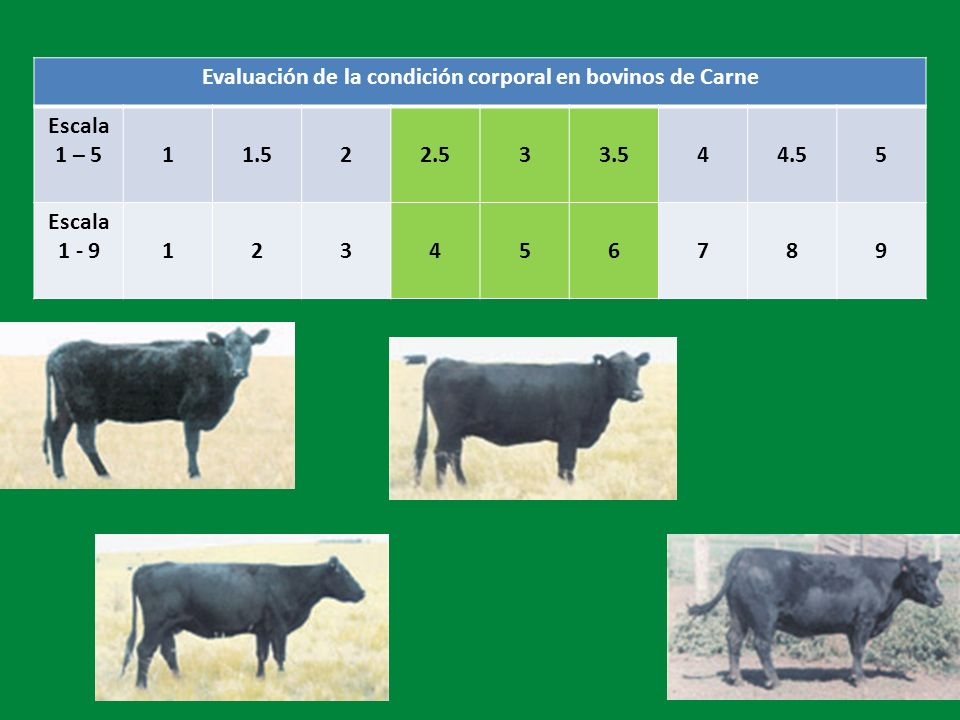 Evaluación de la condición corporal en bovinos de Carne