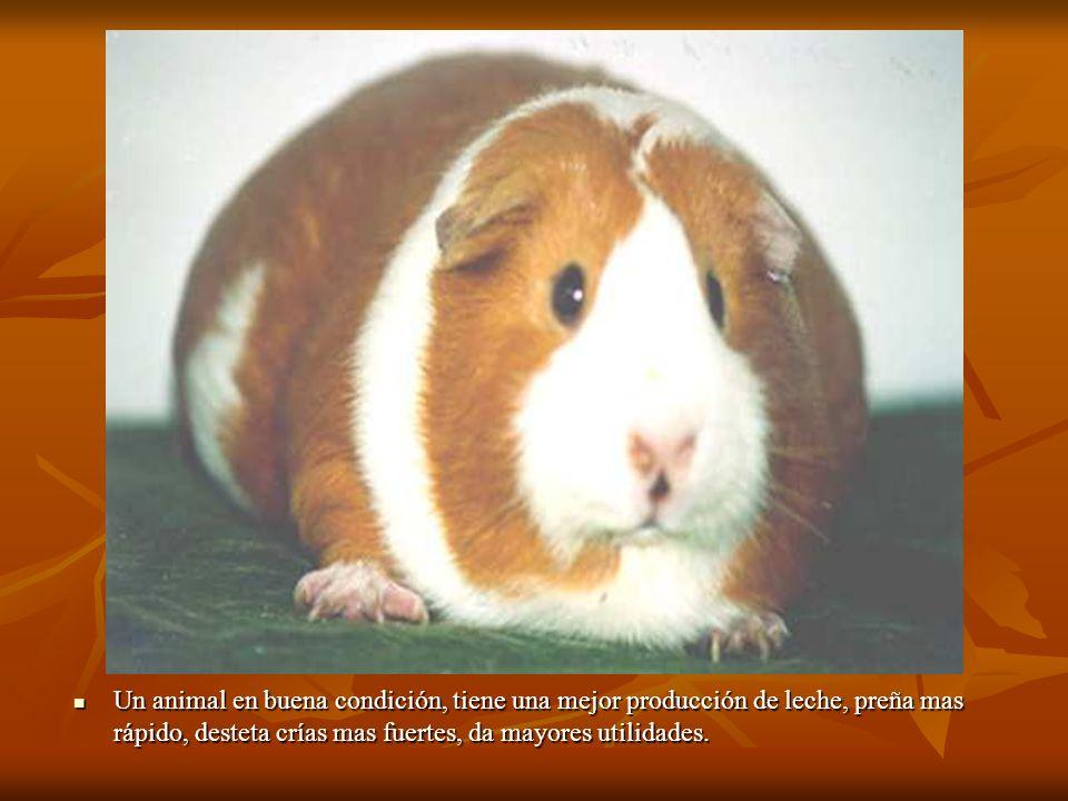 Un animal en buena condición, tiene una mejor producción de leche, preña mas rápido, desteta crías mas fuertes, da mayores utilidades.