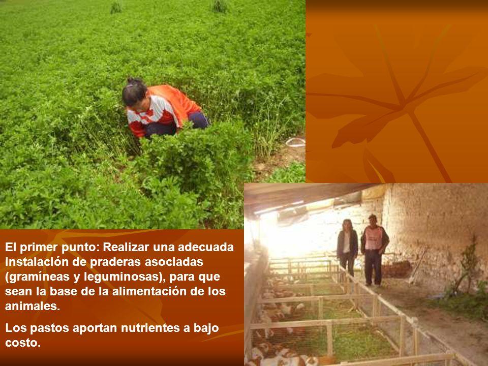 El primer punto: Realizar una adecuada instalación de praderas asociadas (gramíneas y leguminosas), para que sean la base de la alimentación de los animales.