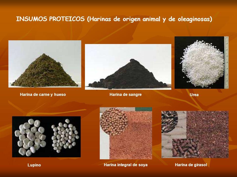 INSUMOS PROTEICOS (Harinas de origen animal y de oleaginosas)