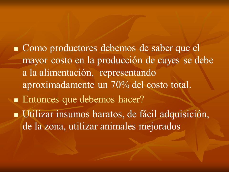 Como productores debemos de saber que el mayor costo en la producción de cuyes se debe a la alimentación, representando aproximadamente un 70% del costo total.