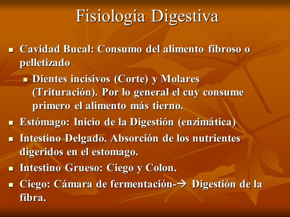 Fisiología Digestiva Cavidad Bucal: Consumo del alimento fibroso o pelletizado.