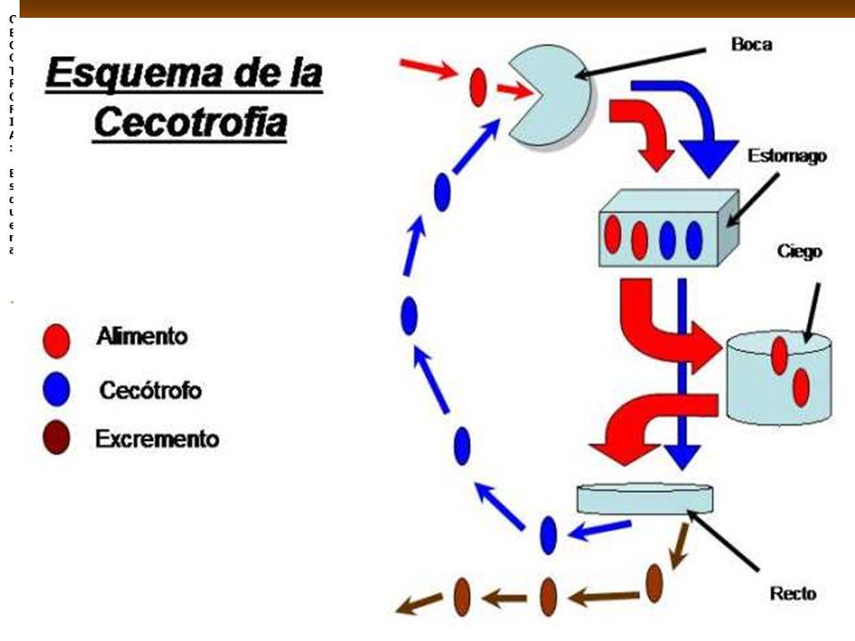 LA CECOTROFIA: Esquema