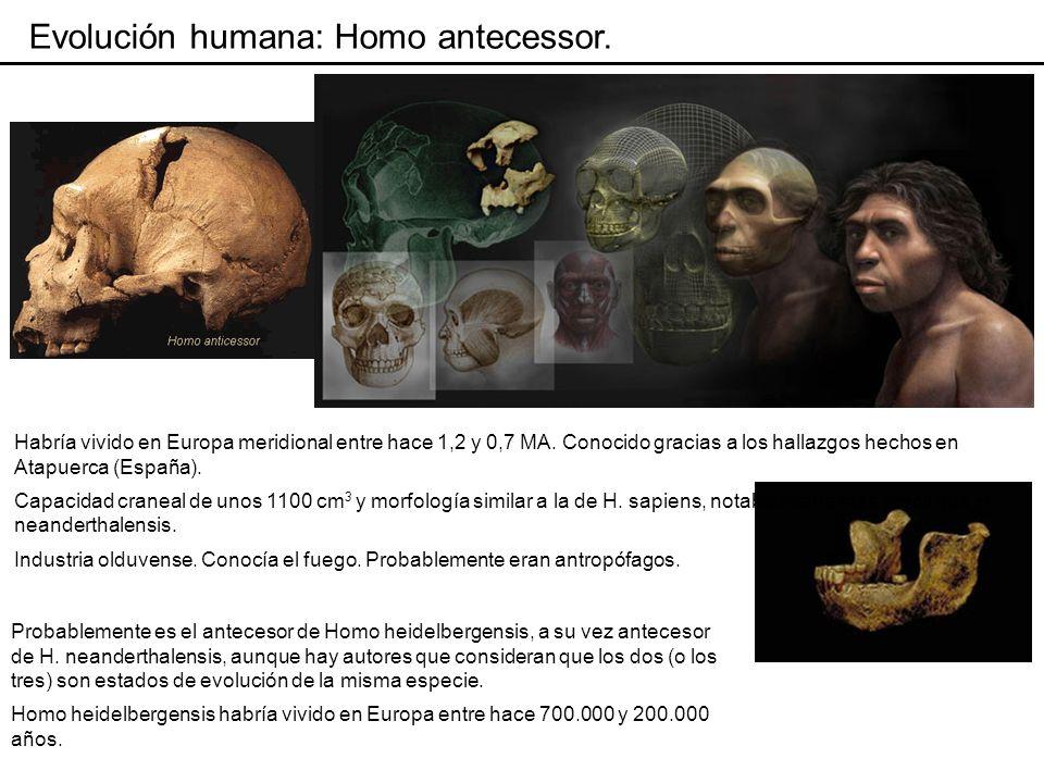 Evolución humana: Homo antecessor.
