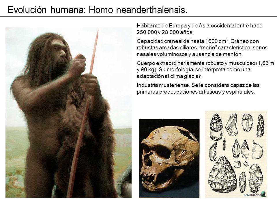 Evolución humana: Homo neanderthalensis.