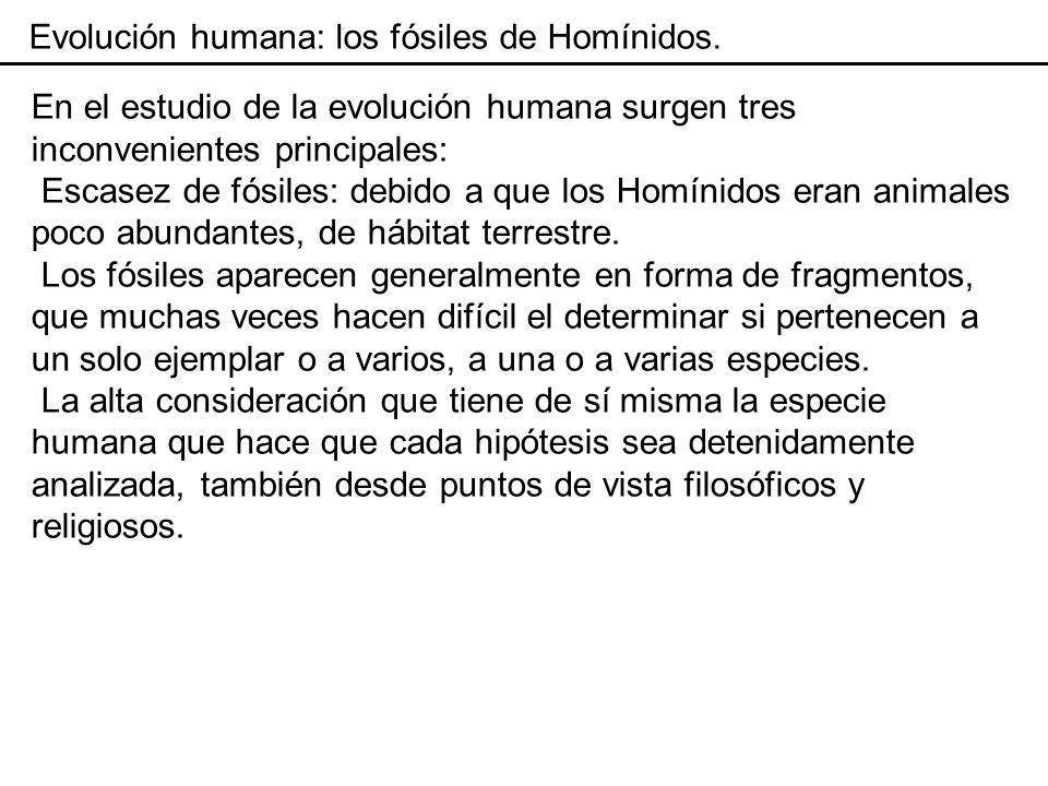 Evolución humana: los fósiles de Homínidos.