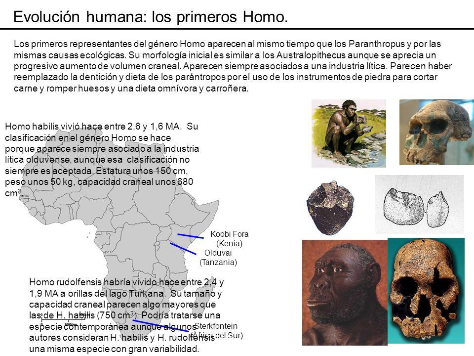 Evolución humana: los primeros Homo.