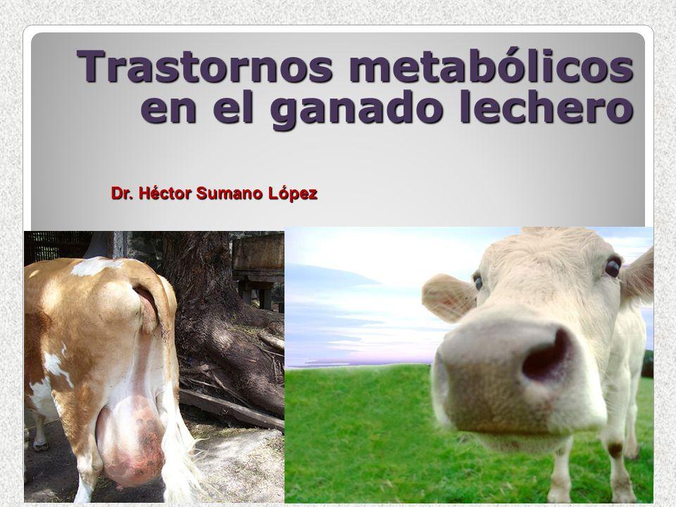 Trastornos metabólicos en el ganado lechero