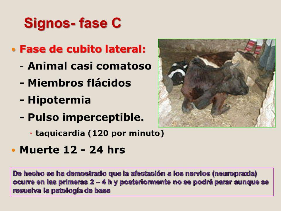 Signos- fase C Fase de cubito lateral: - Animal casi comatoso - Miembros flácidos - Hipotermia - Pulso imperceptible.