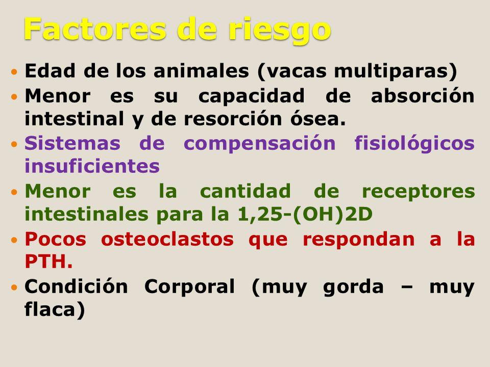 Factores de riesgo Edad de los animales (vacas multiparas)
