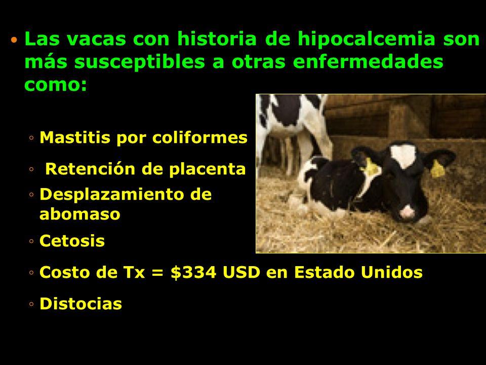 Las vacas con historia de hipocalcemia son más susceptibles a otras enfermedades como: