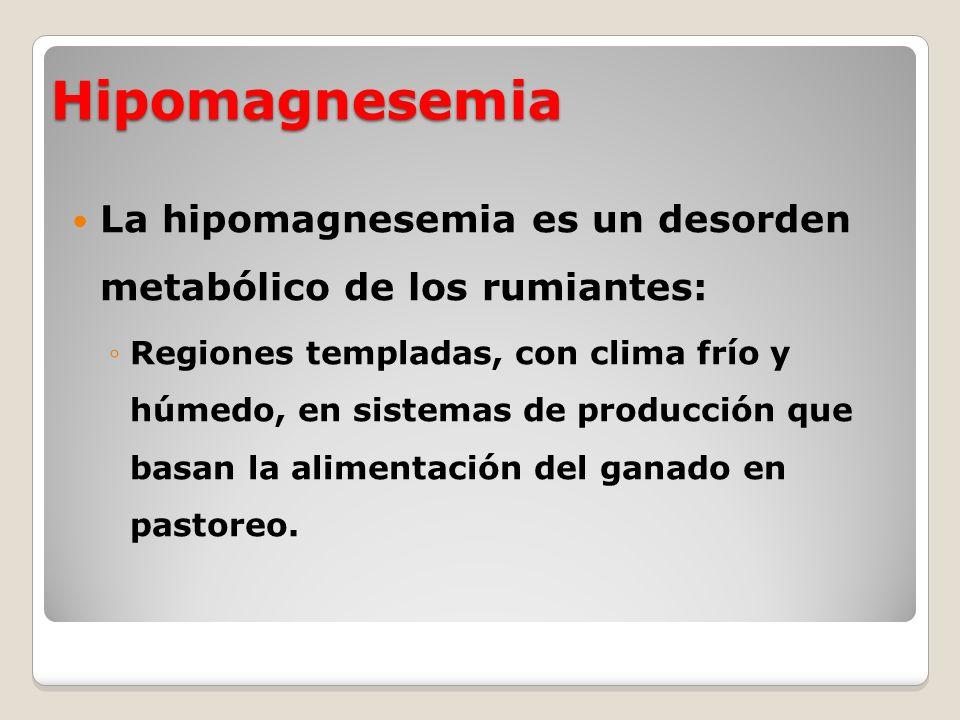 Hipomagnesemia La hipomagnesemia es un desorden metabólico de los rumiantes: