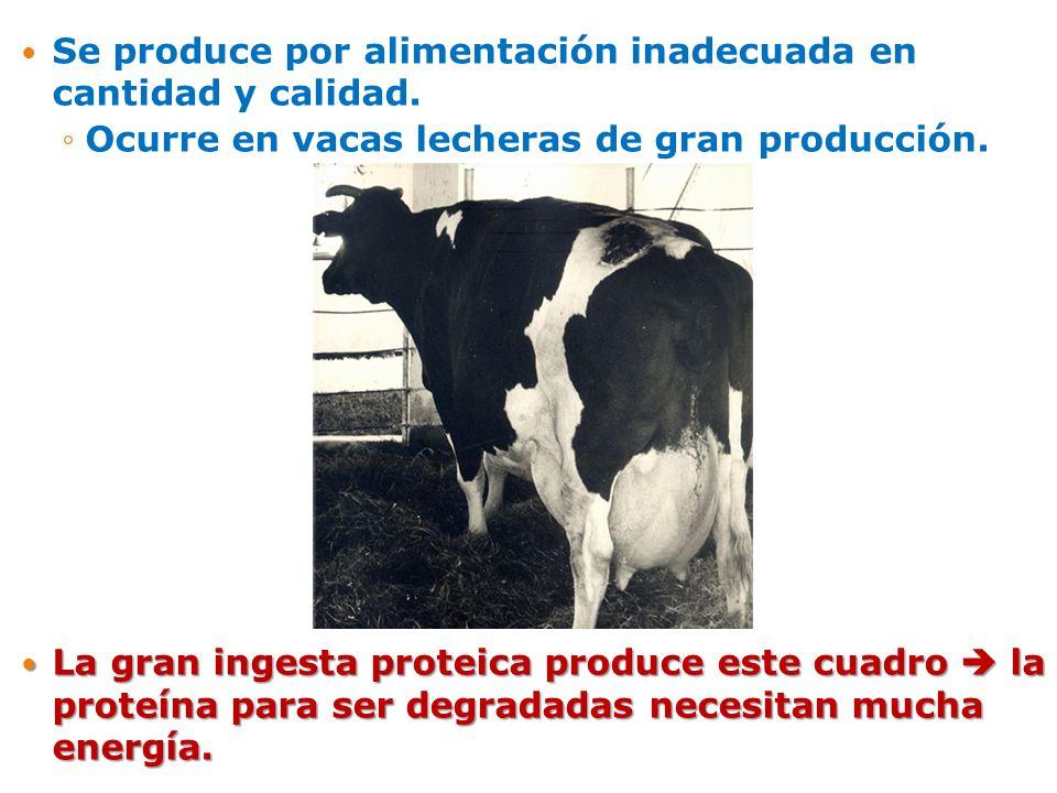 Se produce por alimentación inadecuada en cantidad y calidad.