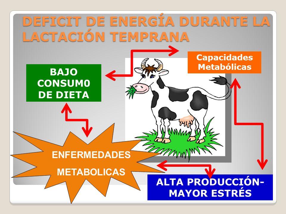 DEFICIT DE ENERGÍA DURANTE LA LACTACIÓN TEMPRANA