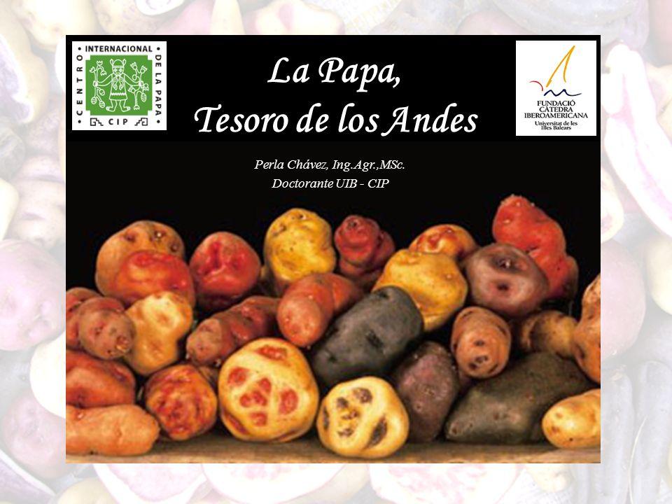La Papa, Tesoro de los Andes