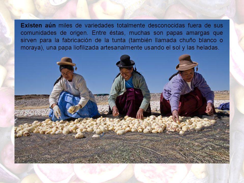 Existen aún miles de variedades totalmente desconocidas fuera de sus comunidades de origen.