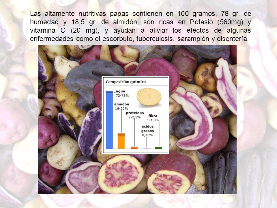 Las altamente nutritivas papas contienen en 100 gramos, 78 gr