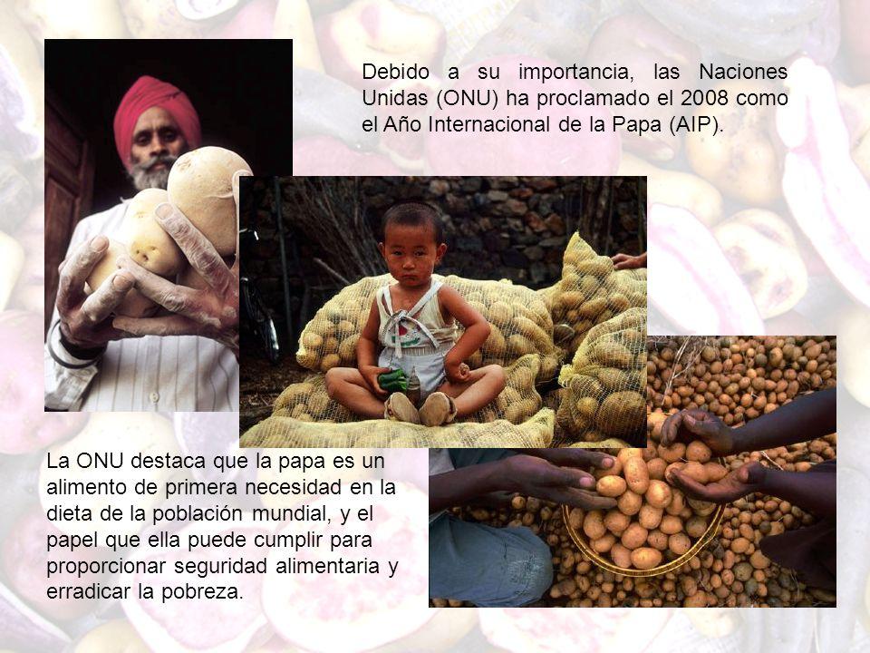 Debido a su importancia, las Naciones Unidas (ONU) ha proclamado el 2008 como el Año Internacional de la Papa (AIP).