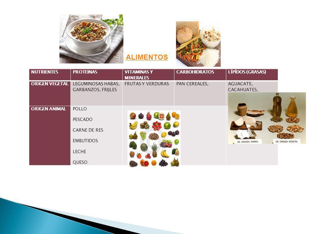ALIMENTOS NUTRIENTES PROTEINAS VITAMINAS Y MINERALES CARBOHIDRATOS