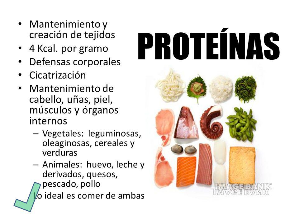 PROTEÍNAS Mantenimiento y creación de tejidos 4 Kcal. por gramo
