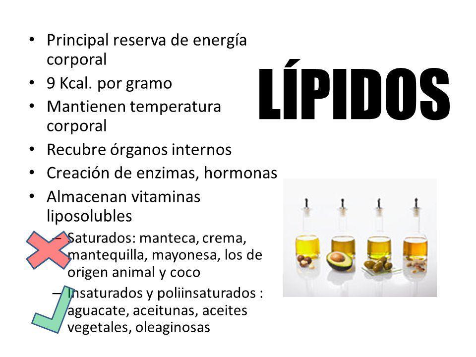 LÍPIDOS Principal reserva de energía corporal 9 Kcal. por gramo