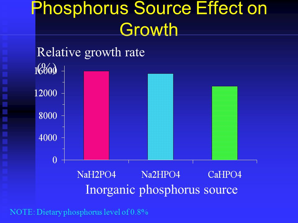 Phosphorus Source Effect on Growth