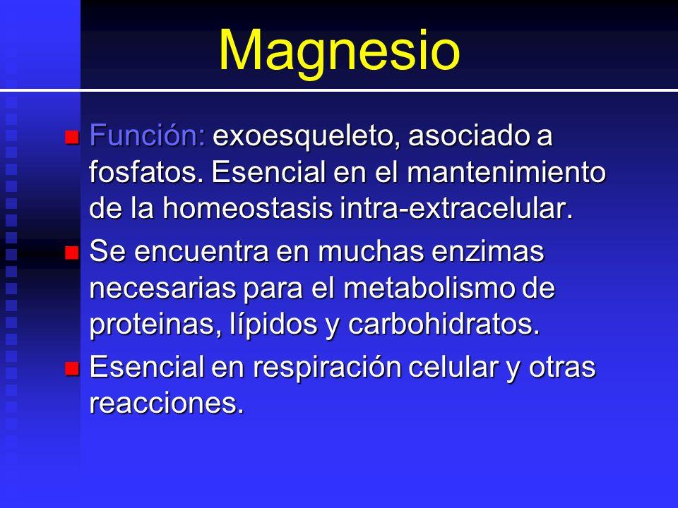 Magnesio Función: exoesqueleto, asociado a fosfatos. Esencial en el mantenimiento de la homeostasis intra-extracelular.