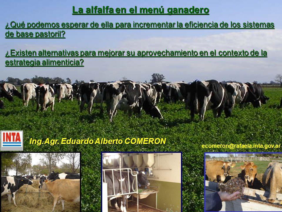La alfalfa en el menú ganadero Ing.Agr. Eduardo Alberto COMERON