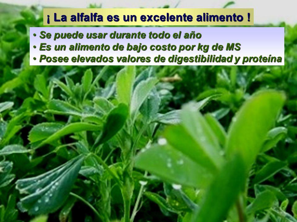 ¡ La alfalfa es un excelente alimento !