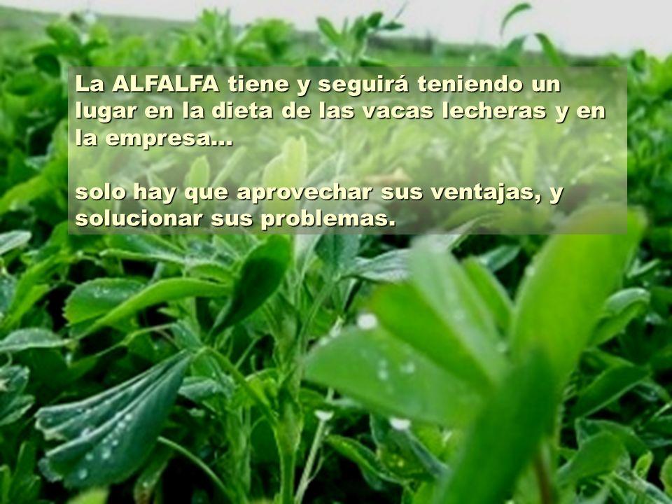 La ALFALFA tiene y seguirá teniendo un lugar en la dieta de las vacas lecheras y en la empresa…