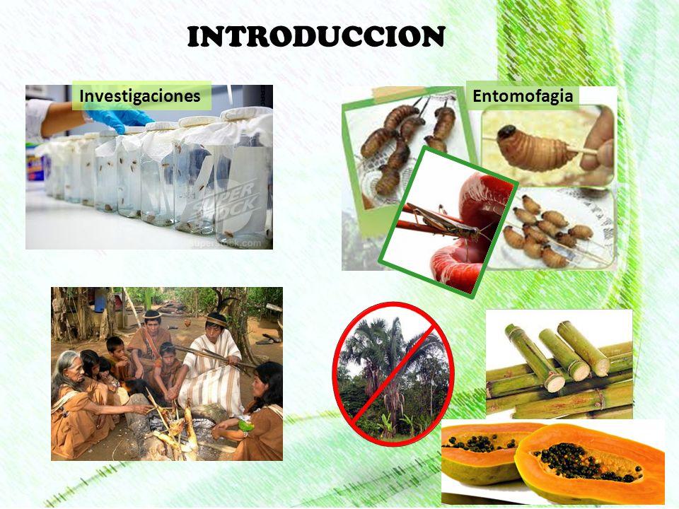 INTRODUCCION Investigaciones Entomofagia