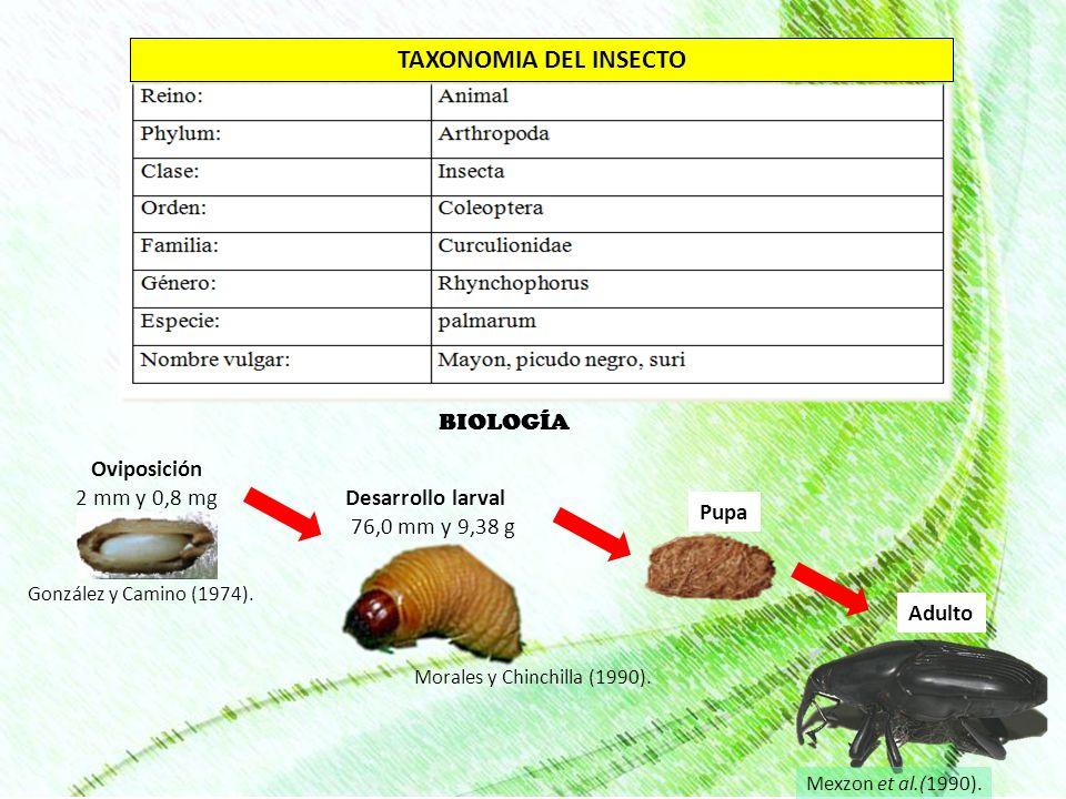 TAXONOMIA DEL INSECTO BIOLOGÍA Oviposición 2 mm y 0,8 mg