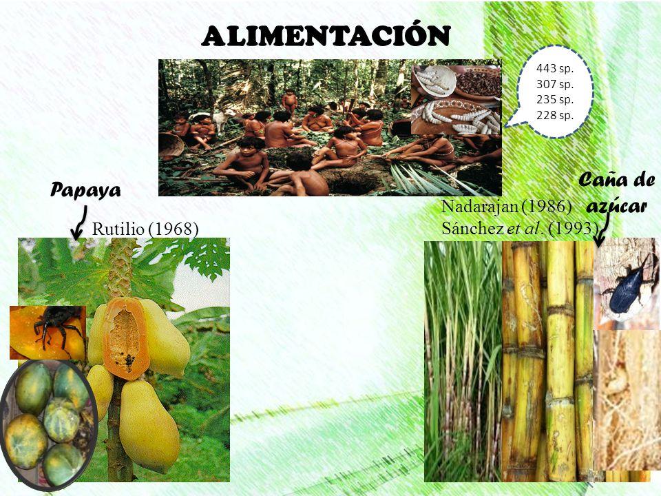 ALIMENTACIÓN Caña de azúcar Papaya Nadarajan (1986)