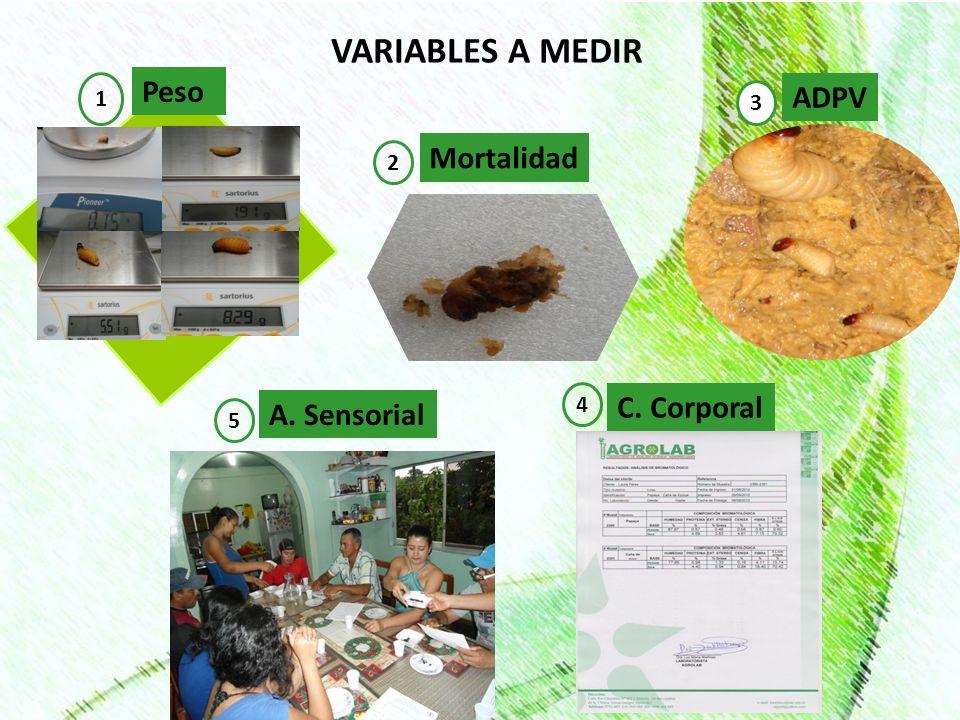 VARIABLES A MEDIR Peso ADPV Mortalidad C. Corporal A. Sensorial 1 3 2